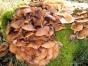 Pilzkultur