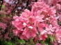 Blütenwunder2