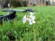 Frühling auf dem Zundelberg