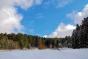 Waldrand mit Wolkenlücke