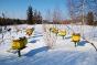Bienenkästen im Spaichinger Wald