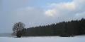 Wald am Schaefertal