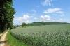 Im Franzosenwald