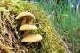 Pilze in Schramberg