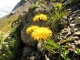 Löwenzahn? Blüten