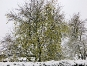 Im Wintergarten