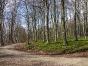 Im Amtenhausener Wald