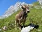 Neugierige Schweizerin